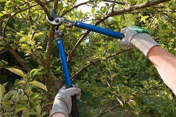 Нормы обрезки и кронирования деревьев
