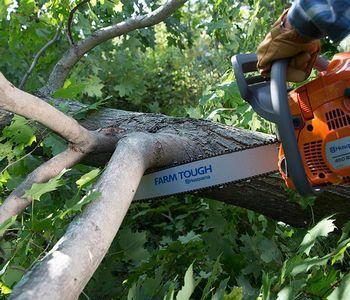 Особенности вырубки деревьев под ЛЭП