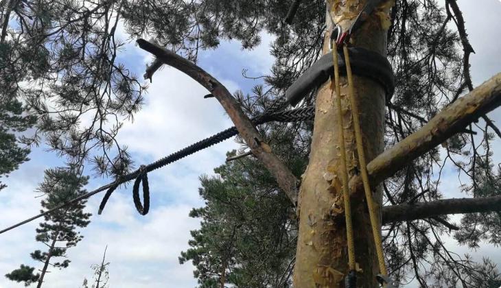 Удаление деревьев частями или целиком