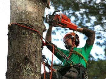 Удаление деревьев альпинистами