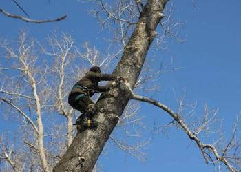 Обрезка кроны деревьев