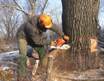 Удаление деревьев целиком