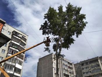 Удаление деревьев с автовышки