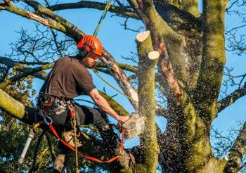Удаление старых деревьев