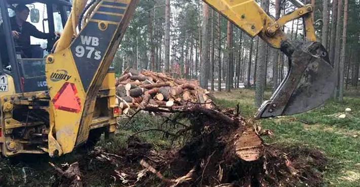 Удаление опасных насаждений трактором в поселке Отрадное