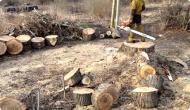 Удаление дуба в посёлке Алабушево